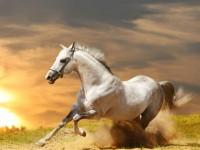 gallopierendes Pferd