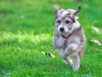 Hund auf der Wiese