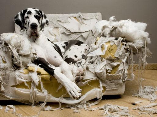Hier lohnt sich eine Hunde Versicherung