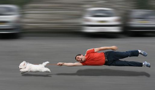Lustig: Hund beim wegrennen